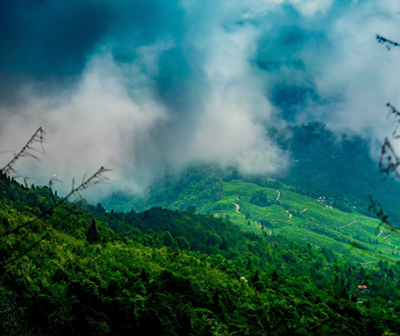 Tea gardens in Darjeeling