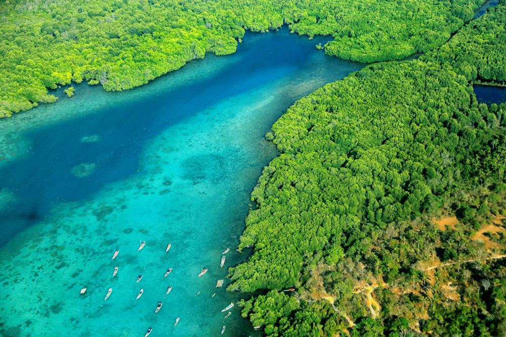 Lokasi Snorkeling di Indonesia yang Ramah Bagi Pemula