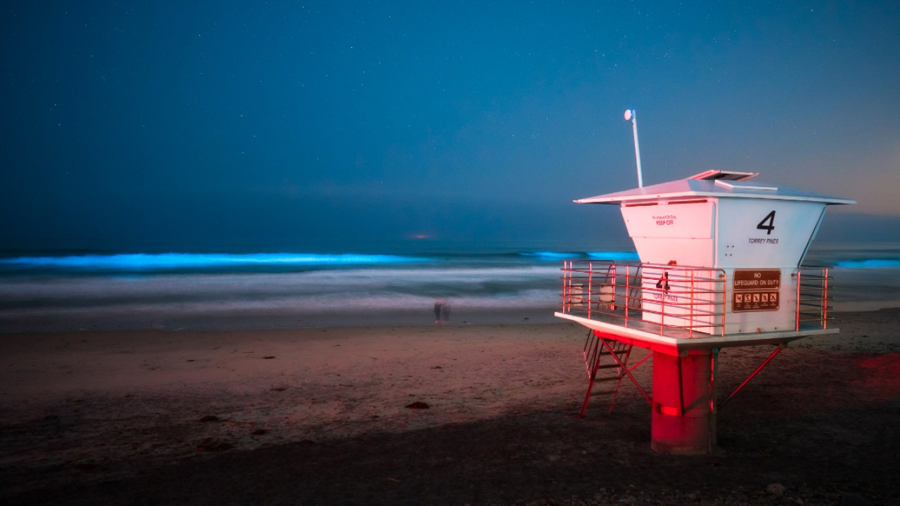 Torrey Pines State Beach, San Diego, California
