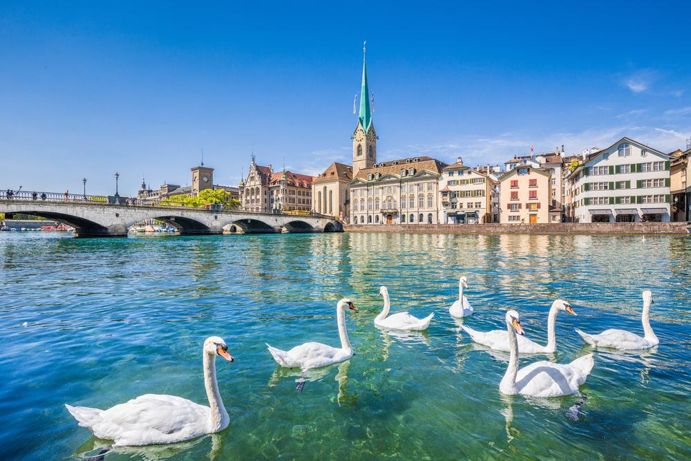 Sekumpulan Angsa di perairan Zurich
