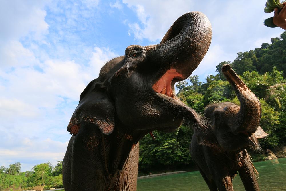 Gajah Tangkahan_Wego