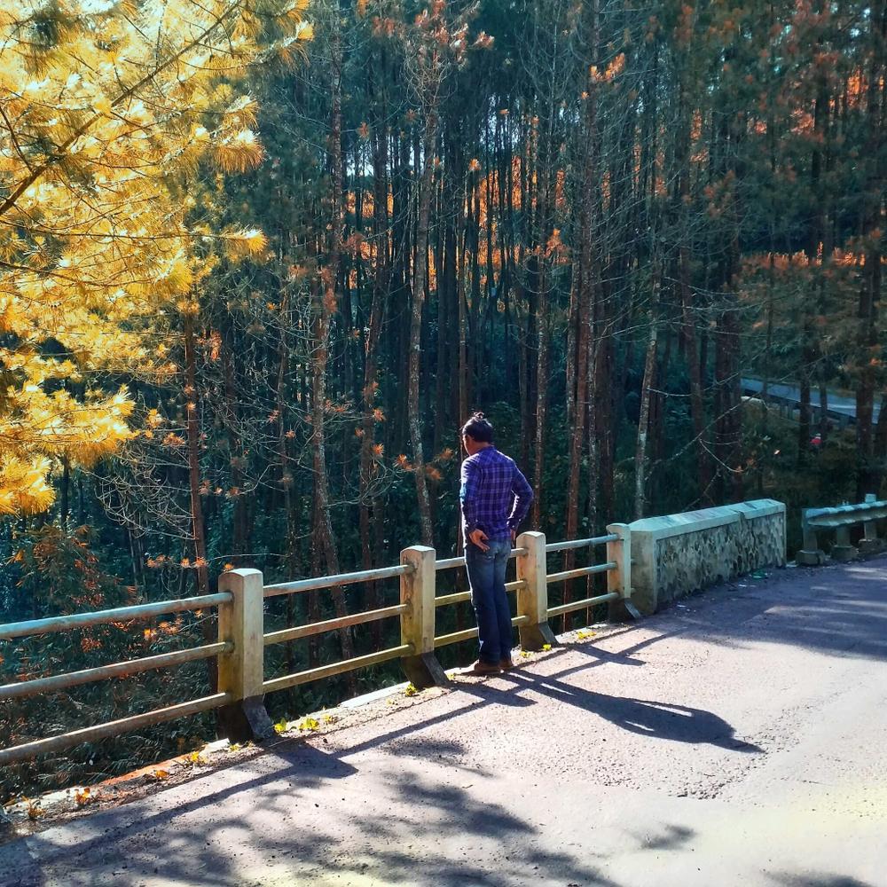 Wisata Aman Hutan Pinus