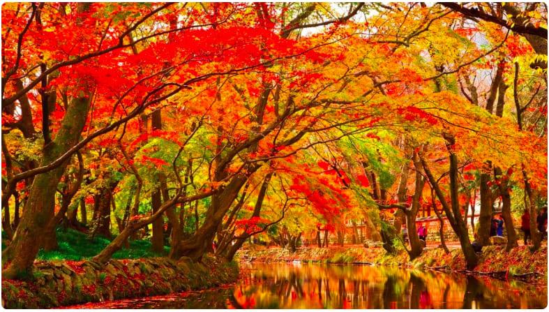 年度楓紅最前線!5大全台賞楓祕境揭幕,浪漫追楓不必跑日本