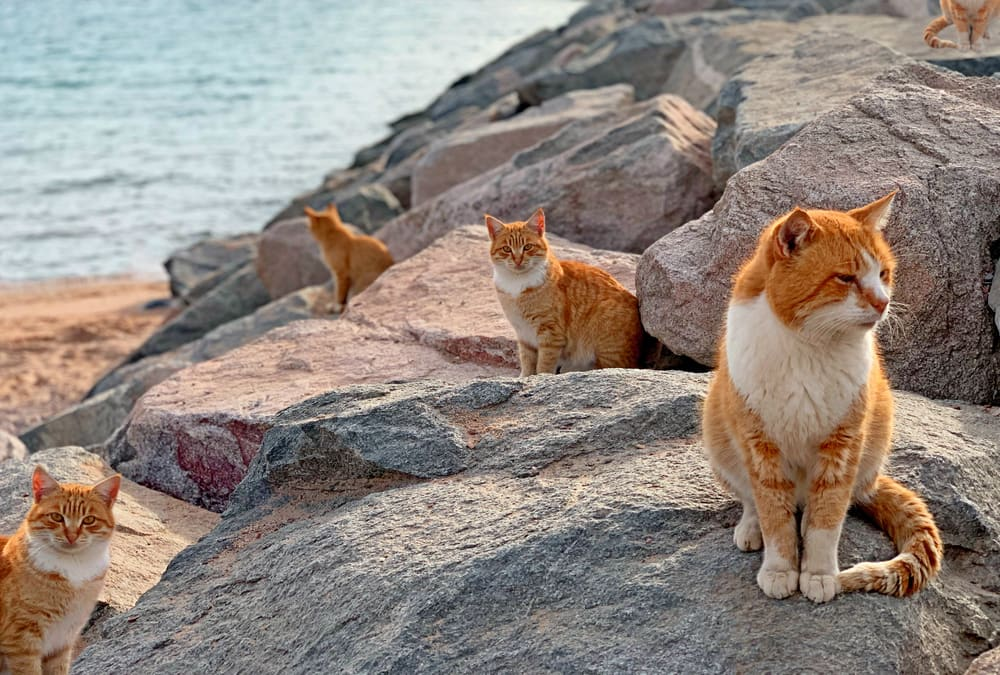 How Can You Resist This Much Furry Awesomeness? 10 Must-visit Places for Cat Lovers to Profess Undying Love for the Fabulous Felines