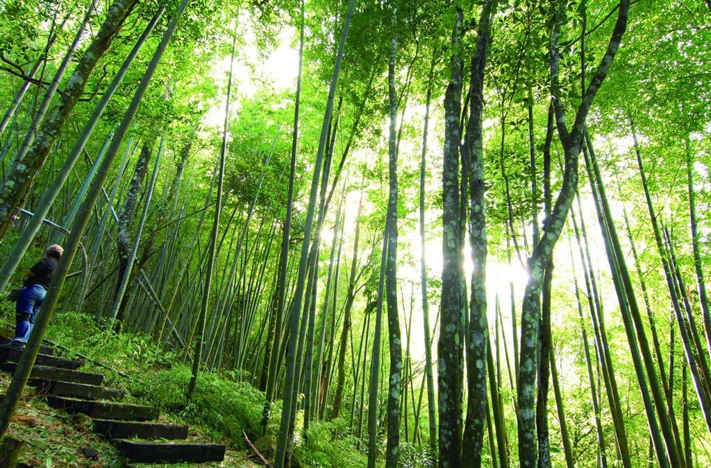 森呼吸! 全台森林系六大避暑勝地特搜!