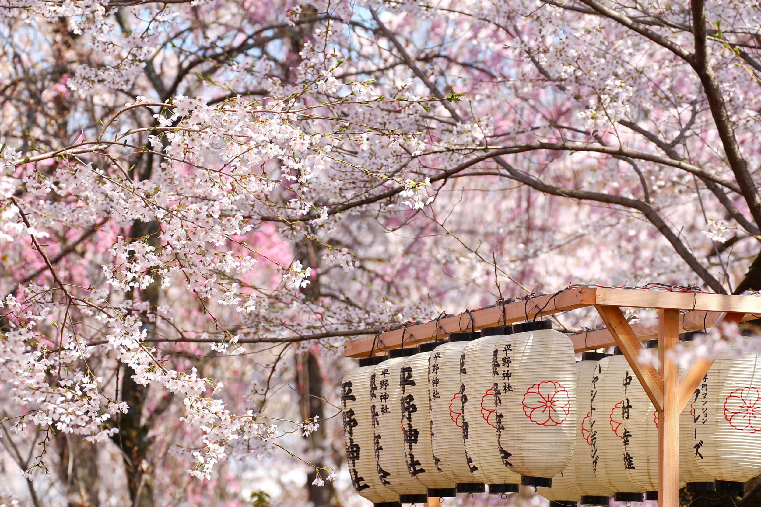 Where And When To See Cherry Blossom Trees In Japan Tokyo And Kyoto Places To See Sakura Flowers And Schedule Wego Com