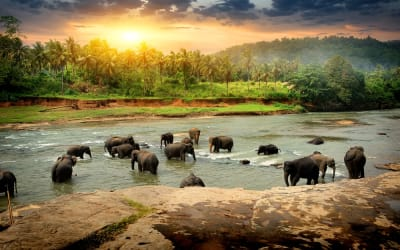 The Lush Land of Trains, Temples, and Tea Leaves: 7 Things to Do In Sri Lanka