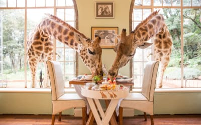 Have Breakfast With Giraffes? Sleep in a Treehouse? Yes, You Can, in These 7 Most Unusual Hotels Around the World