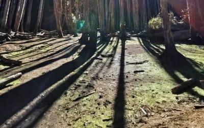 散心自由行~忘憂森林一日遊:交通方式、必吃美食、周邊景點整理