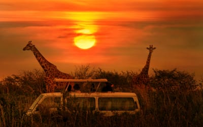 Wonderfully Wild: 7 Reasons to Go On An African Safari Because It Will Change More Than Just Your Life