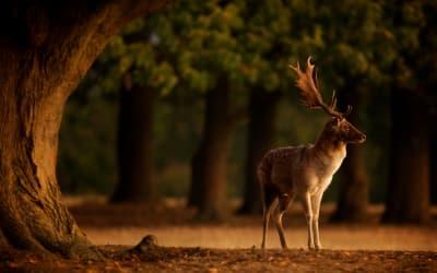 Discover Animal Kingdom magic in Britain this spring