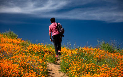 Walk Through a Sea of Wildflowers: 6 Destinations to Witness the Superbloom Around the World