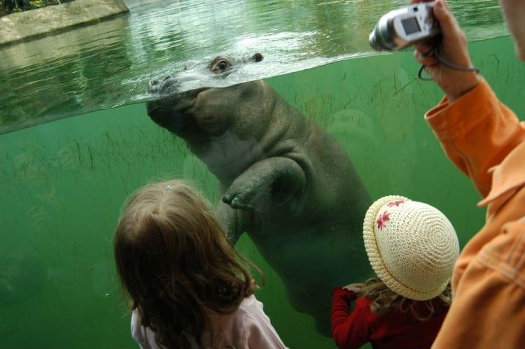 Kid-Friendly_Activities_to_Do_in_Berlin_Tierpark