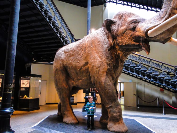 Kid-Friendly_Activities_to_Do_in_Berlin_Natural History Museum