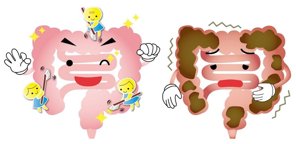 講到腸道的健康就會聯想到益生菌