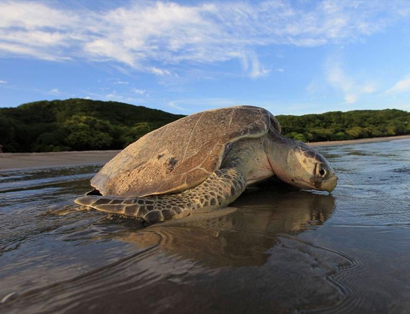 tortugas Nicaragua reserve