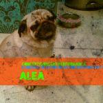 Picture 8bbb8dfb c079 48a5 b48d 3912e6b590fa