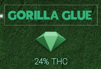 תפרחת גורילה גלו (Gorilla Glue)| דיאמונדס – אינדיקה T20/C4