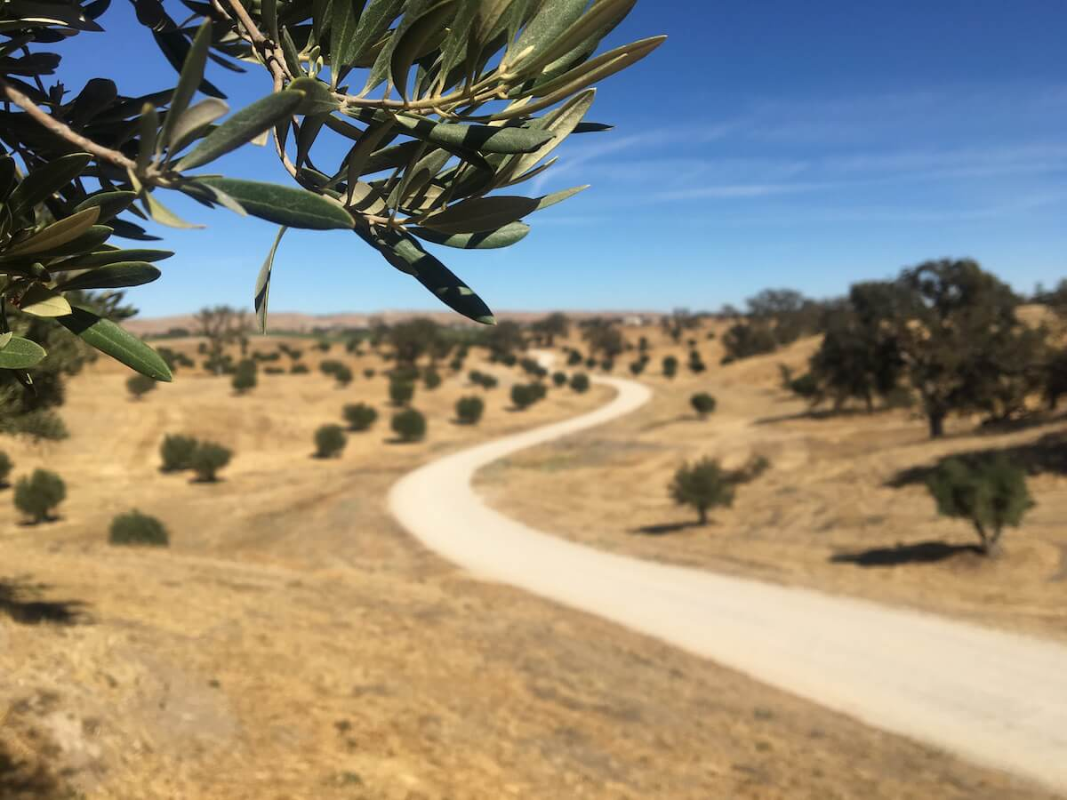 160-Certified Organic acres of gentle rolling, private, Creston countryside – Creston Olive Ranch for sale
