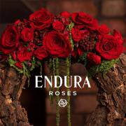 Endura Roses