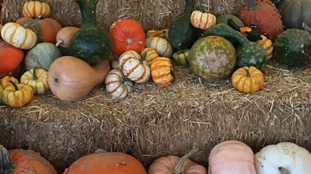 Tina's Pumpkin Patch