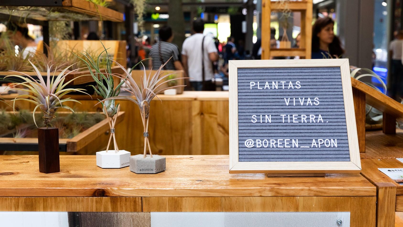 BOREEN - Plantas del aire