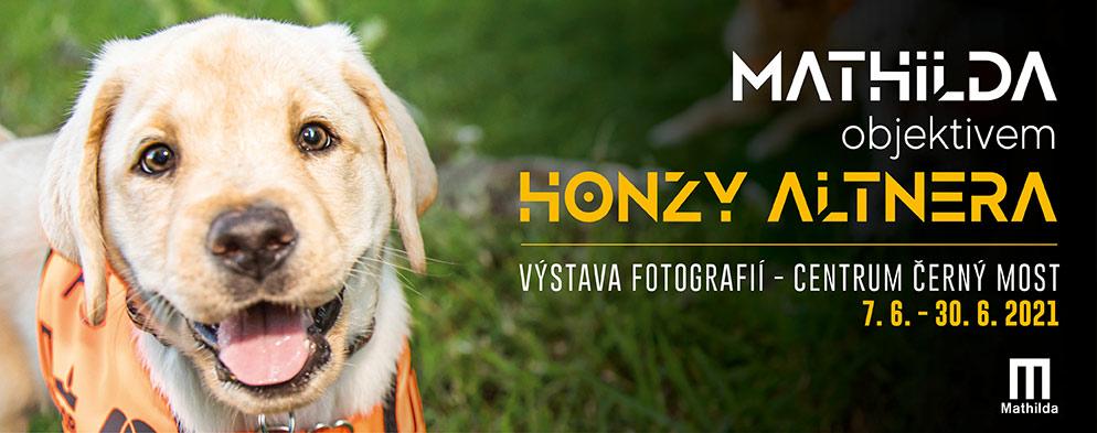Když oči mají 4 nohy: Výchova vodicích psů objektivem Honzy Altnera