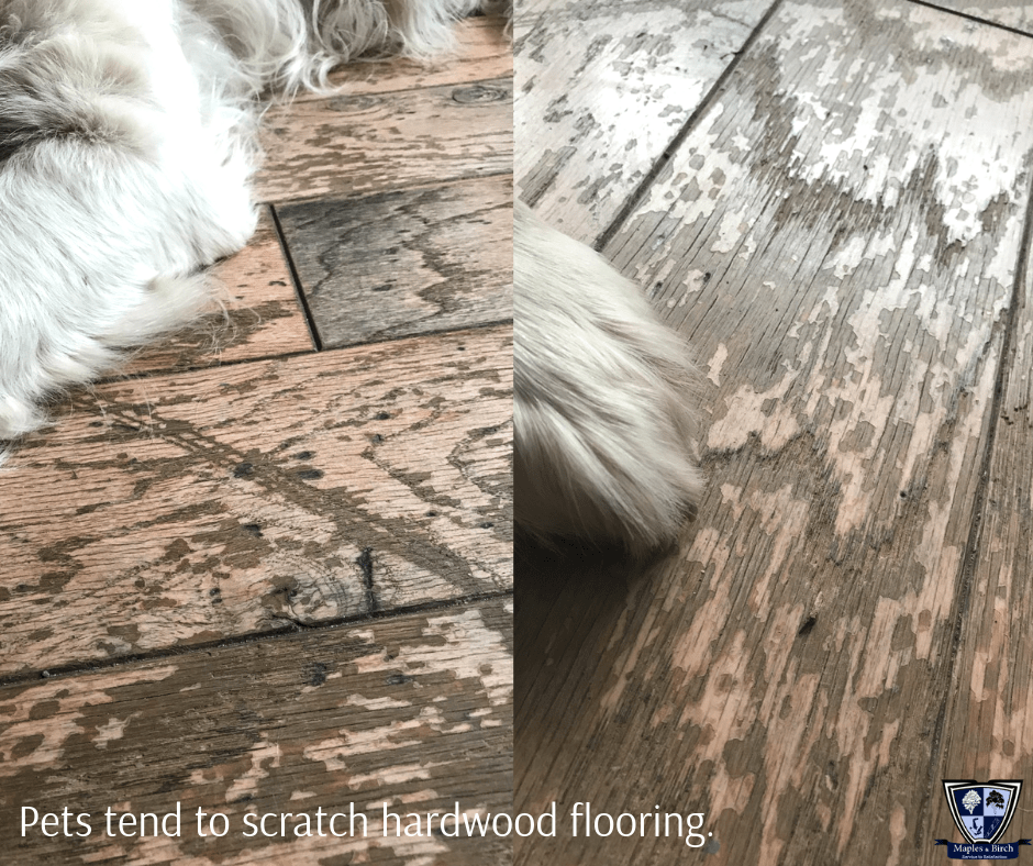Main Image for article Choosing the right pet-friendly hardwood floor