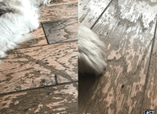 Choosing the right pet-friendly hardwood floor