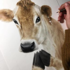 Dickison is currently putting the finishing touches on Holy Cow. Photo / Supplied.