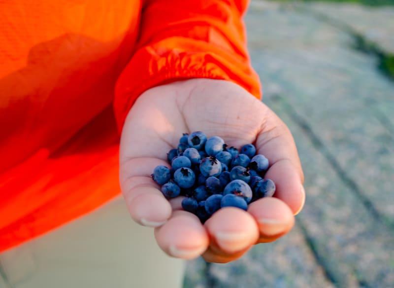 handful of wild blueberries