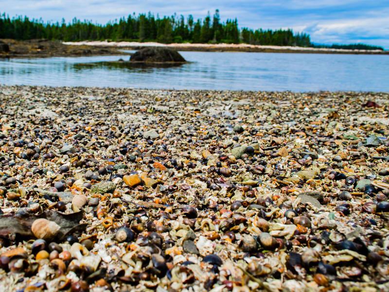 snails on beach