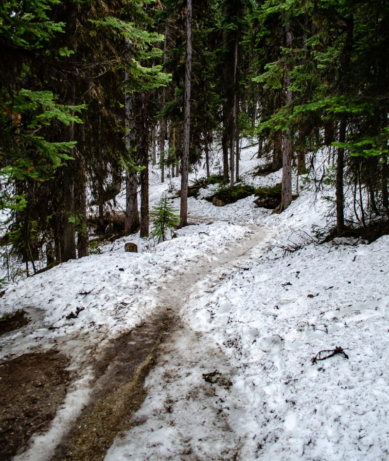 a snowy trail leading up the mountain to mirror lake