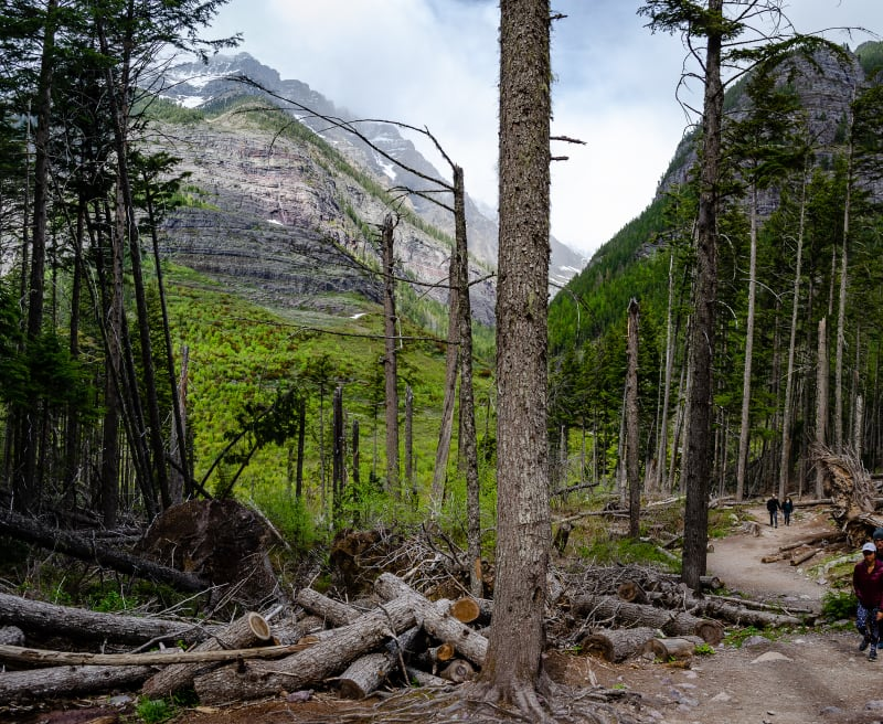 hiking trail with many trees knocked over all around