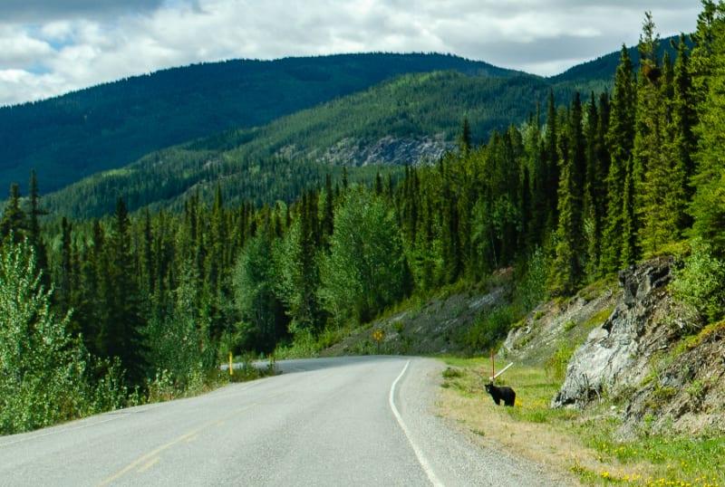 a black bear along the road