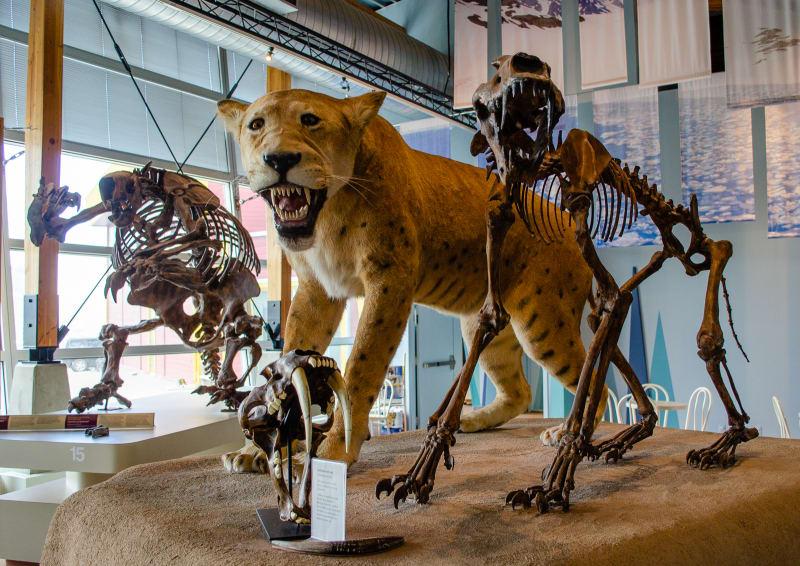 large cat skeletons