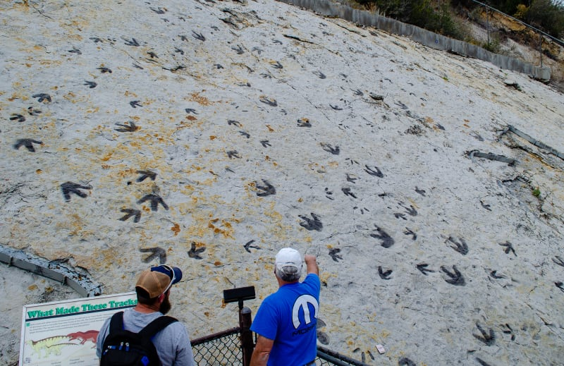 dinosaur tracks along a wall