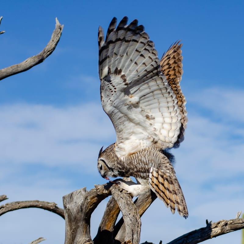 an owl landing on a branch