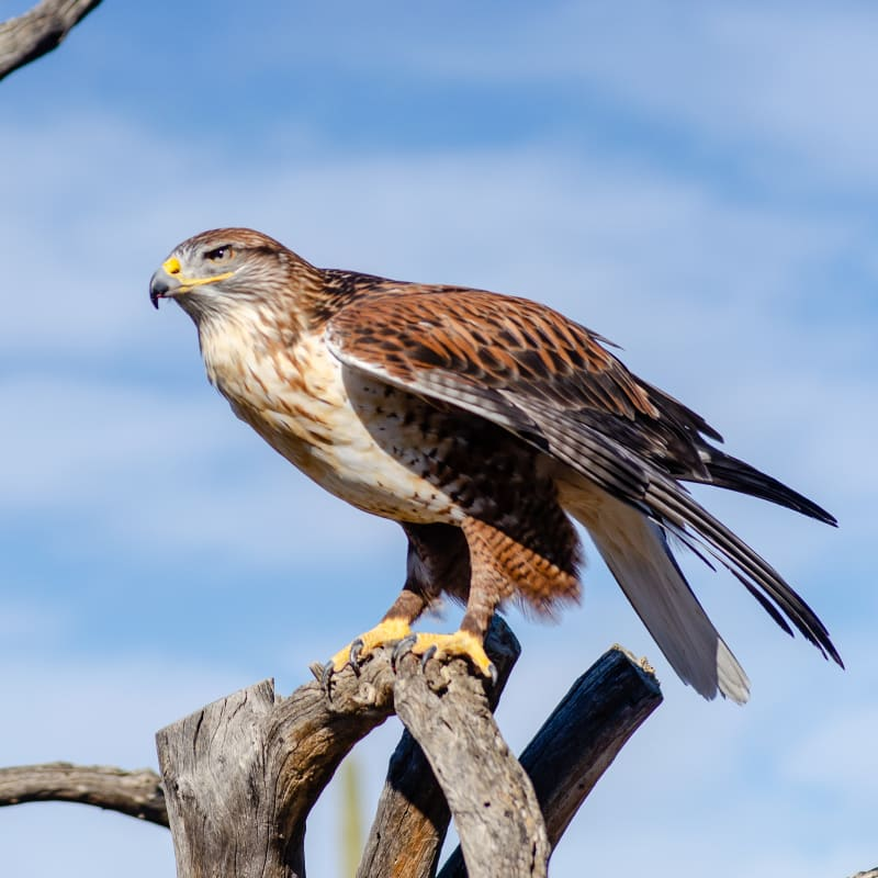 a hawk perched on a branch