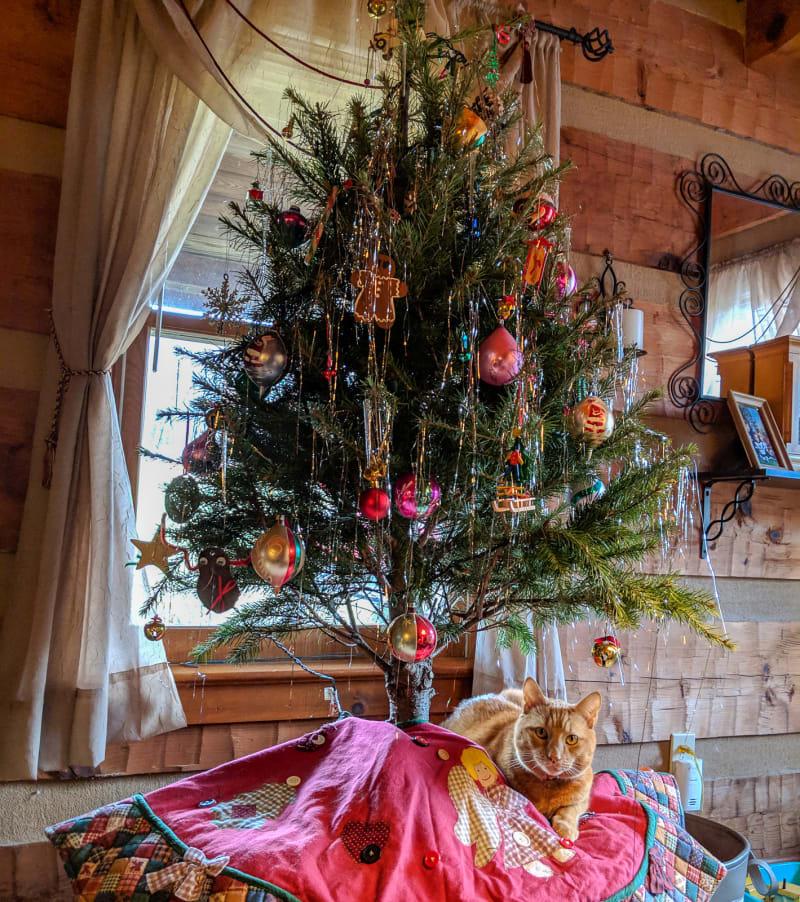 mango under the christmas tree
