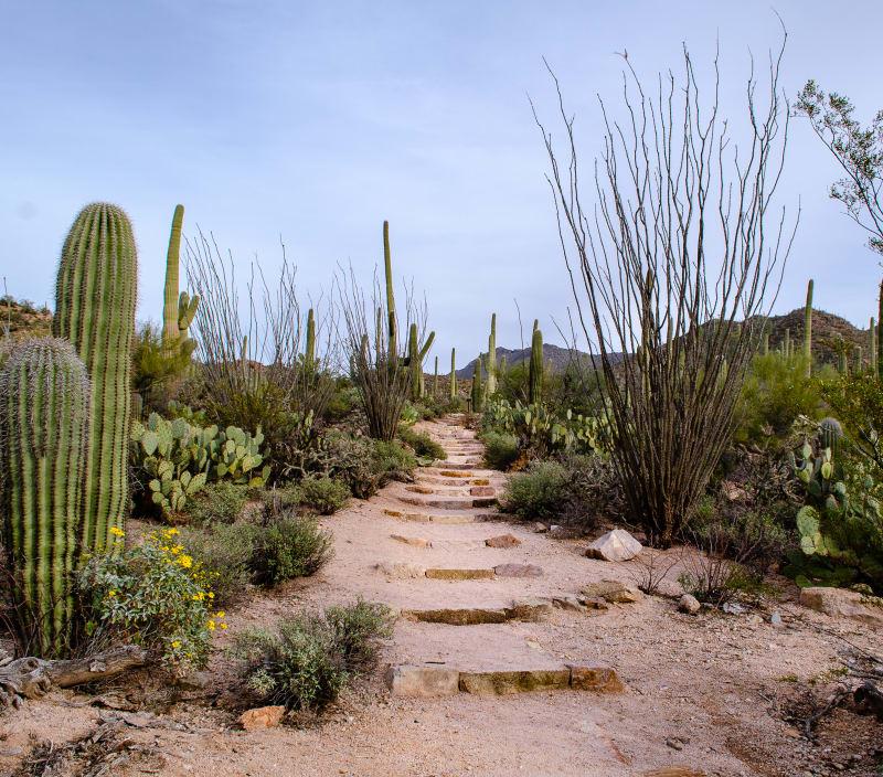 a trail leading through the desert