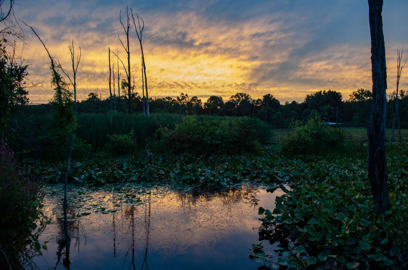 sunset over beaver marsh