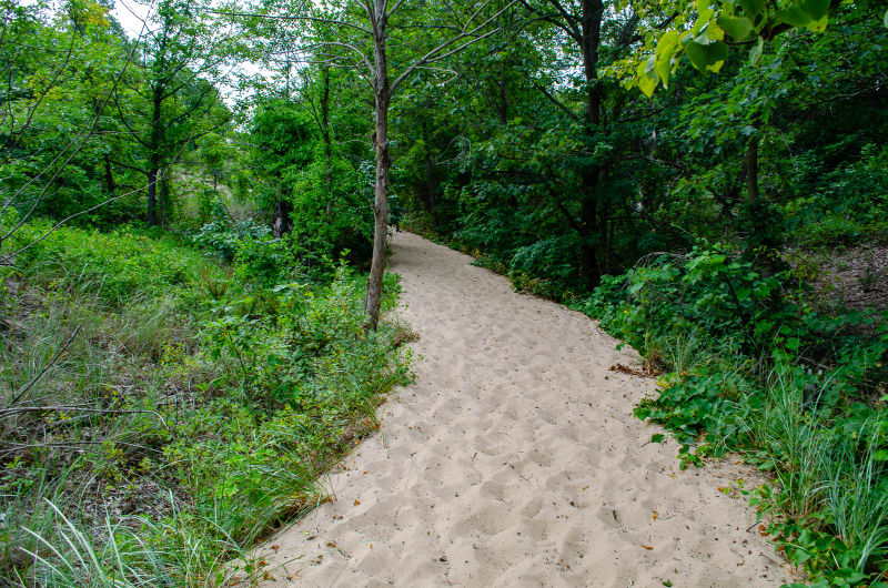sand trail up mt tom sand dune