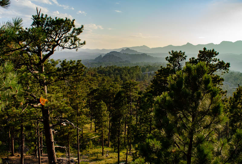 expansive view of black hills