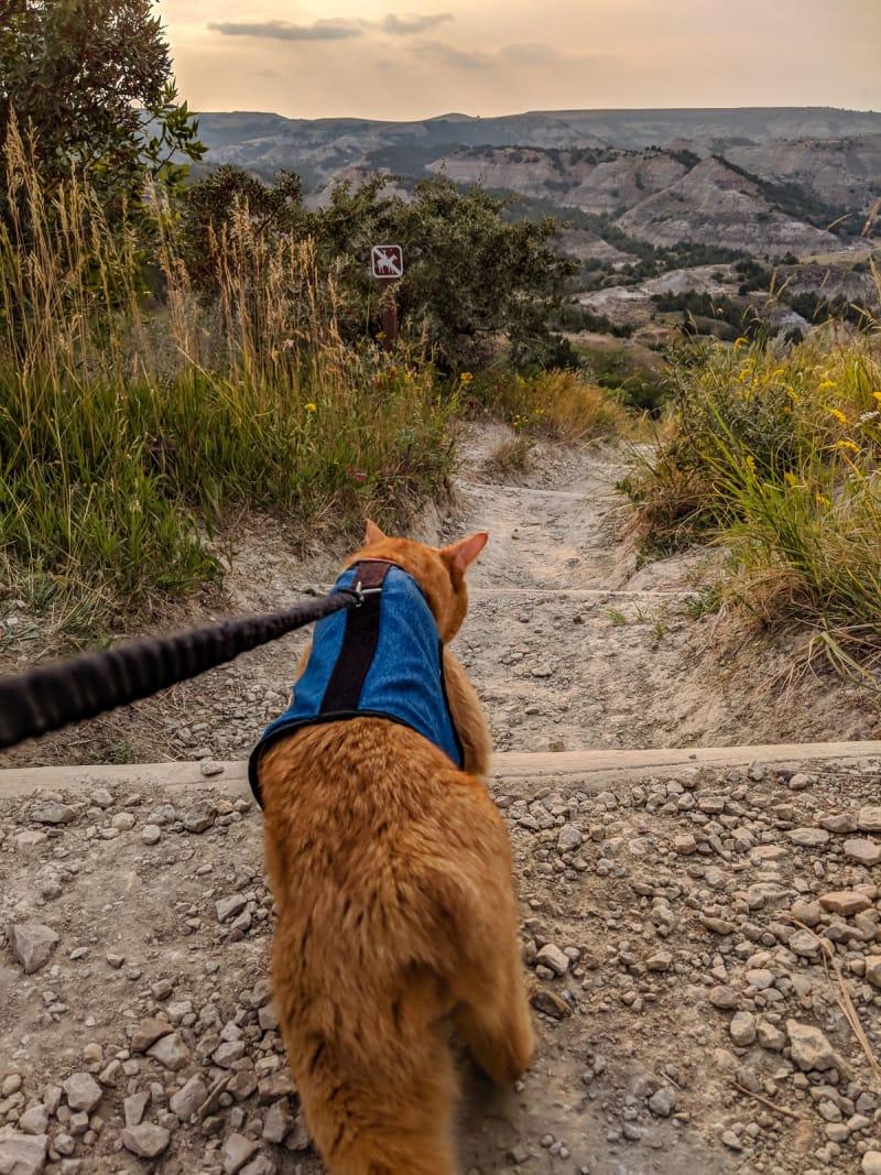 mango on a trail walk