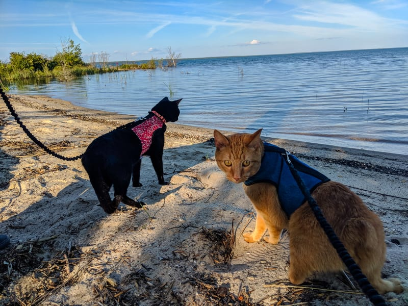 ollie and mango exploring the lakeshore beach