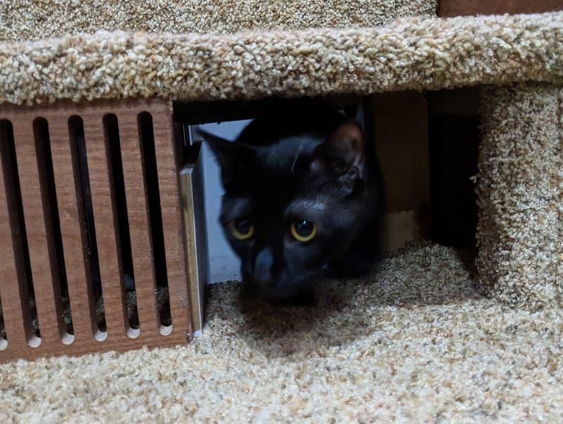Ollie testing the litter box ramp.