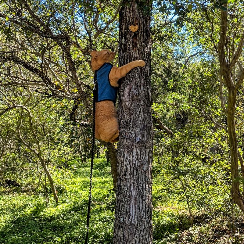mango climbing a tree