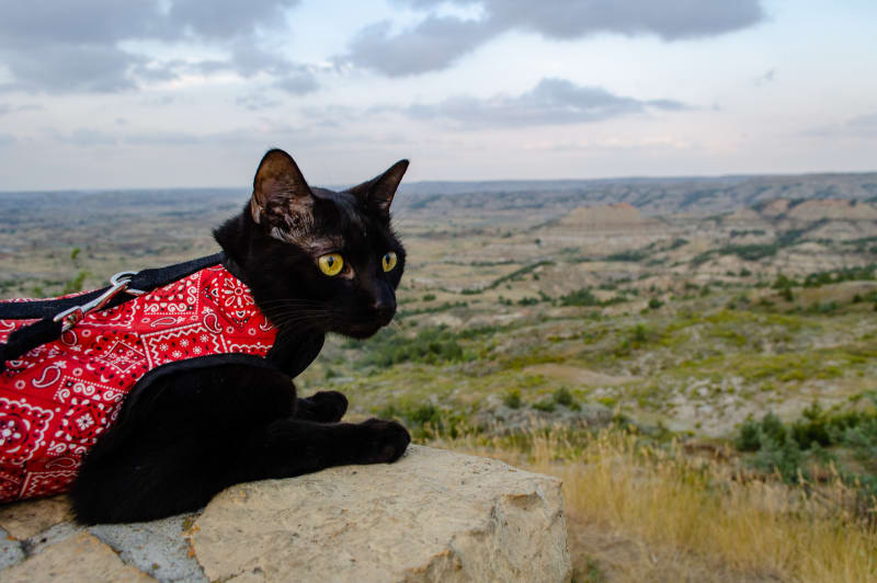 ollie sitting on a wall overlooking a canyon