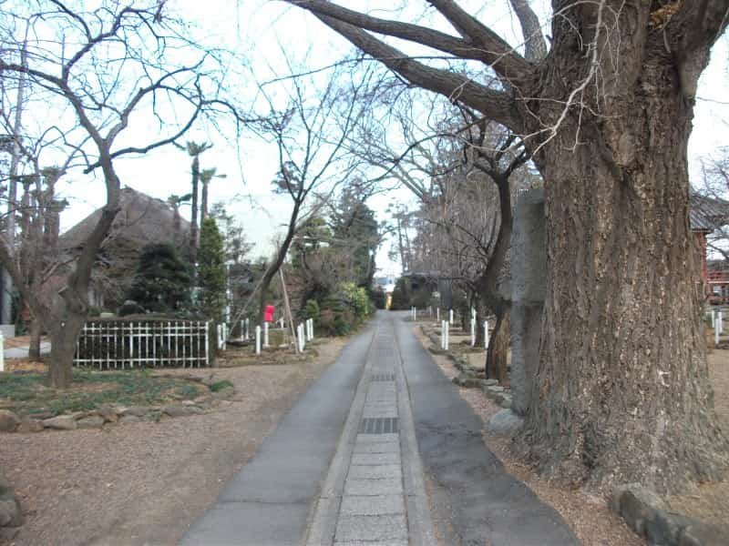 hitachikokubunji_temple_4.jpg